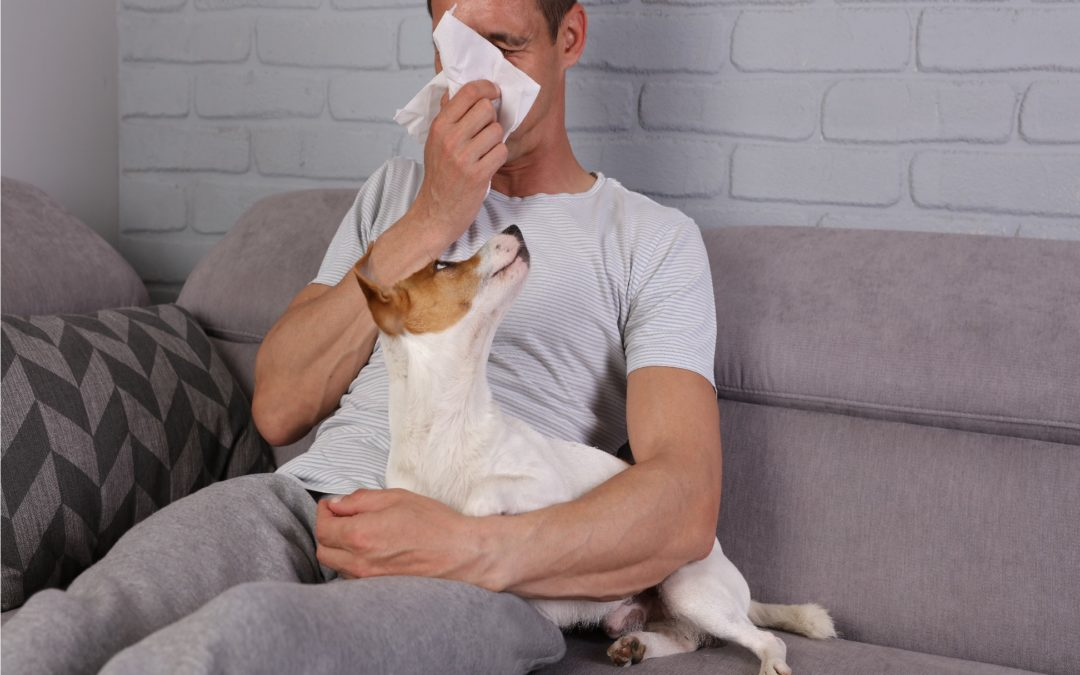 You'll Be Glatz to Know Everything About Pet Allergies!
